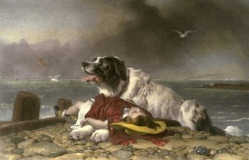Newfoundland dogs were good ship's dogs.